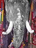 PH036_013 dans ELEPHANT